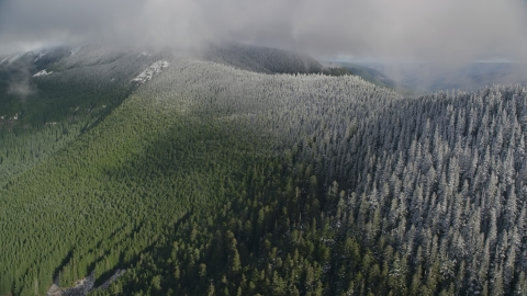 AX154_059.0000074F - Aerial stock photo of Snow line on evergreen trees atop a mountain ridge, Cascade Range, Hood River County, Oregon