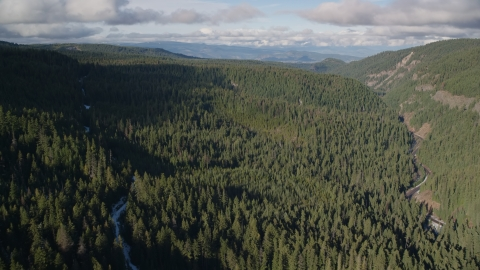 AX154_127.0000170F - Aerial stock photo of A canyon and evergreen forest near Highway 35, Cascade Range, Hood River Valley, Oregon