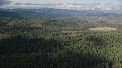 AX154_135.0000000F - Aerial stock photo of Evergreens near logging and farm areas near Parkdale, Oregon