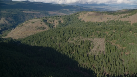 AX154_145.0000127F - Aerial stock photo of An evergreen forest and clear cut logging areas near Dee, Oregon