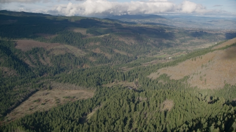 AX154_147.0000301F - Aerial stock photo of An evergreen forest clear cut area in Dee, Oregon