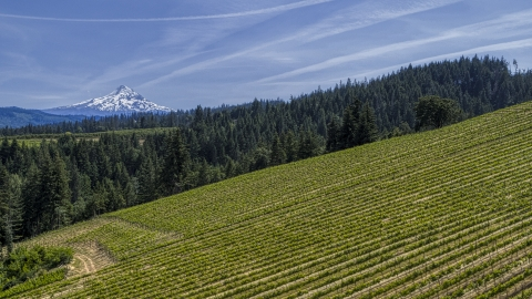 DXP001_009_0002 - Aerial stock photo of Mount Hood seen from hillside Phelps Creek Vineyards in Hood River, Oregon