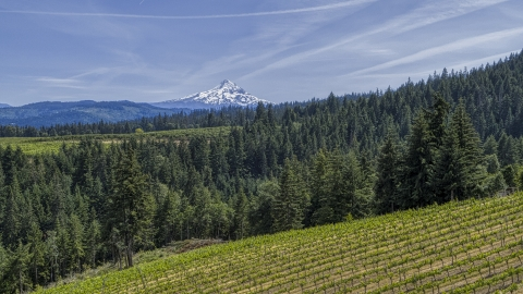 DXP001_009_0003 - Aerial stock photo of Snowy Mount Hood seen from hillside Phelps Creek Vineyards in Hood River, Oregon