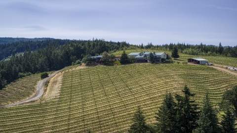 DXP001_009_0008 - Aerial stock photo of Phelps Creek Vineyards grapevines and a hilltop home in Hood River, Oregon