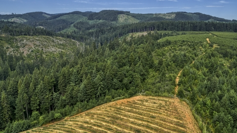 DXP001_015_0006 - Aerial stock photo of Evergreen forest near grapevines at a vineyard in Hood River, Oregon