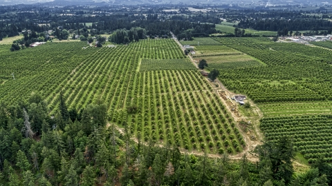 DXP001_015_0007 - Aerial stock photo of Rows of trees at an orchard in Hood River, Oregon