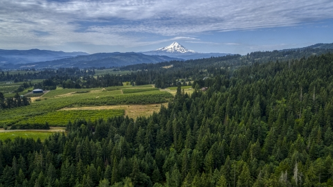 DXP001_015_0012 - Aerial stock photo of Mt Hood seen from orchards and evergreen forest in Hood River, Oregon