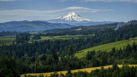 DXP001_015_0013 - Aerial stock photo of Mt Hood seen from orchards and evergreen trees in Hood River, Oregon