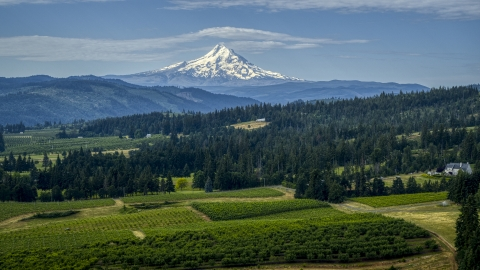 DXP001_015_0014 - Aerial stock photo of Orchards and evergreen trees with Mt Hood in the distance in Hood River, Oregon