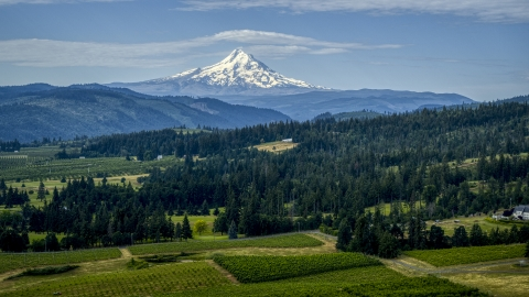 DXP001_015_0015 - Aerial stock photo of Orchards, evergreen trees, and Mt Hood in the distance in Hood River, Oregon