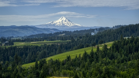 DXP001_015_0016 - Aerial stock photo of Orchards, evergreen trees, and snowy Mt Hood in the distance in Hood River, Oregon