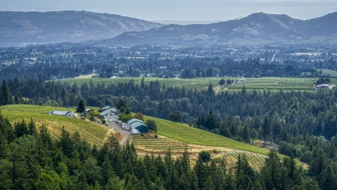 DXP001_016_0010 - Aerial stock photo of Phelps Creek Vineyards on a hilltop with a view of orchards and mountain ridges in the distance, Hood River, Oregon