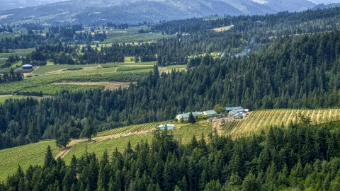 DXP001_016_0011 - Aerial stock photo of Phelps Creek Vineyards on a hilltop with a view of orchards in the distance, Hood River, Oregon