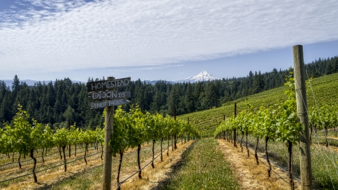 DXP001_017_0001 - Aerial stock photo of A sign by rows of grapevines with a view of Mt Hood, Hood River, Oregon