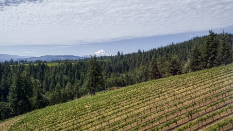 DXP001_017_0002 - Aerial stock photo of A vineyard on a hillside with view of Mt Hood, Hood River, Oregon