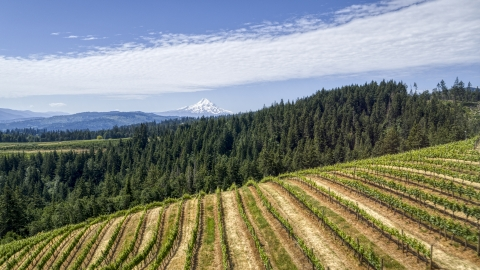 DXP001_017_0015 - Aerial stock photo of Mount Hood seen from hillside Phelps Creek Vineyards in Hood River, Oregon
