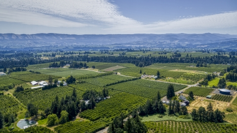 DXP001_017_0022 - Aerial stock photo of A view of orchards in Hood River, Oregon