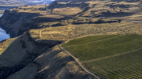 DXP001_019_0017 - Aerial stock photo of Vineyard between cliffs and Lewis and Clark Highway in Goldendale, Washington