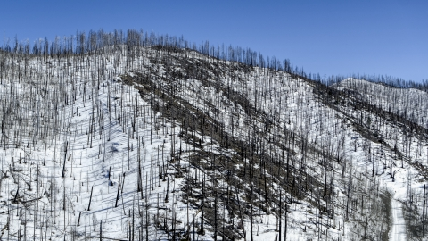 DXP002_134_0006 - Aerial stock photo of Dead trees on snowy slopes in New Mexico
