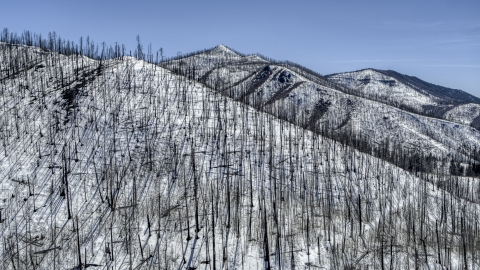 DXP002_134_0011 - Aerial stock photo of A snowy mountain slope with dead trees, New Mexico