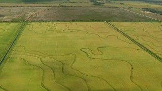 AF0001_000220 - HD stock footage aerial video approach and tilt to crop fields in Wharton County, Texas