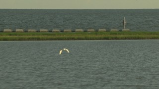 AF0001_000422 - HD stock footage aerial video track a heron flying low over a bay, Gulf Coast, Alabama, sunset
