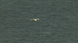 AF0001_000423 - HD stock footage aerial video of a heron in flight over water, Gulf Coast, Alabama, sunset