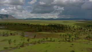 AF0001_000646 - HD stock footage aerial video flyby palm trees and shallow ponds in savanna, Southern Venezuela