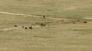 AF0001_000969 - HD stock footage aerial video of cattle on an open plain near El Paso, Texas