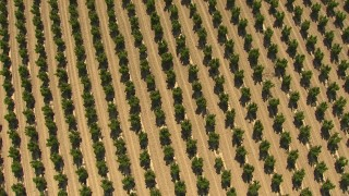 AI06_FRM_001 - 1080 stock footage aerial video bird's eye view of a field of crops, Central Valley, California