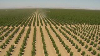 AI06_FRM_006 - 1080 stock footage aerial video flying low over crops, revealing and approaching a tractor, Central Valley, California