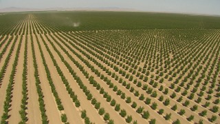 AI06_FRM_020 - 1080 stock footage aerial video flying over rows of crops, approaching a tractor, Central Valley, California