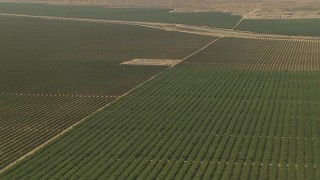 AI06_FRM_024 - 1080 stock footage aerial video flying over farmland, tilt down to crops, Central Valley, California
