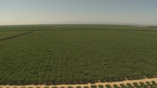 AI06_FRM_043 - 1080 stock footage aerial video flying low by fields of crops, Central Valley, California
