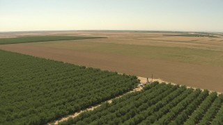 AI06_FRM_048 - Aerial stock footage of 1080 aerial \video flying over orchard, approaching open farmland, Central Valley, California