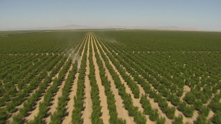 AI06_FRM_051 - 1080 stock footage aerial video fly over orchards, reveal tractors between rows, Central Valley, California