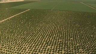 AI06_FRM_056 - 1080 stock footage aerial video flying over rows of crops, tilt to more farmland, Central Valley, California