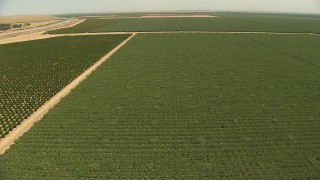 AI06_FRM_057 - 1080 stock footage aerial video flying over fields of crops, approaching irrigation canals, Central Valley, California
