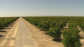 AI06_FRM_067 - 1080 stock footage aerial video following dirt road between rows of trees, Central Valley, California