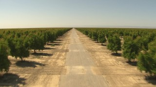 AI06_FRM_068 - 1080 stock footage aerial video following a dirt road between rows of trees, Central Valley, California