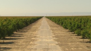 AI06_FRM_069 - 1080 stock footage aerial video flying low, following a dirt road between rows of trees, Central Valley, California
