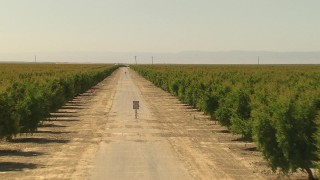 AI06_FRM_070 - 1080 stock footage aerial video following dirt road between rows of orchard trees, Central Valley, California