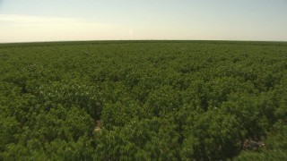 AI06_FRM_076 - 1080 stock footage aerial video fly low over an orchard in Central Valley, California