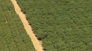 AI06_FRM_077 - 1080 stock footage aerial video flyby and fly away from dirt road through orchard, Central Valley, California