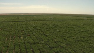 AI06_FRM_083 - 1080 stock footage aerial video flying over an orchard, Central Valley, California