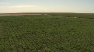 AI06_FRM_084 - 1080 stock footage aerial video flying over fields of trees, Central Valley, California