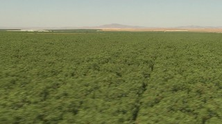 AI06_FRM_089 - 1080 stock footage aerial video flying low over an orchard, Central Valley, California