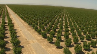 AI06_FRM_100 - 1080 stock footage aerial video turn and follow a road through orchard, Central Valley, California