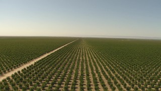 AI06_FRM_101 - 1080 stock footage aerial video flyby vast orchard, Central Valley, California