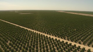 AI06_FRM_103 - 1080 stock footage aerial video fly over orchard and dirt roads, Central Valley, California